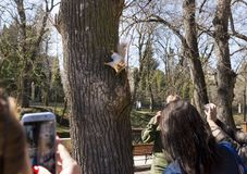 People take pictures of gadgets squirrel on a tree. In the Park Stock Image