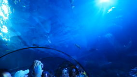 People taking photos and videos under the tunnel at Sea Life Aquarium. Peschiera del Garda, Italy - August 2016: People taking photos and videos under the tunnel stock video