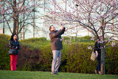 People taking pictures by flourishing Sakura Royalty Free Stock Images