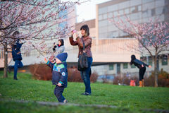 People taking pictures by flourishing Sakura Royalty Free Stock Photography