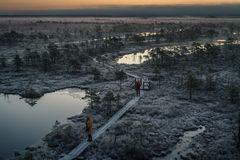 People taking pictures on wooden path, road in swamp on early winter morning Royalty Free Stock Image