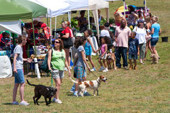 People And Their Dogs Walk Around At Dog Festival Stock Photos