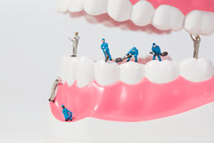 People to clean tooth model Stock Photography