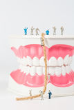 People to clean tooth model Royalty Free Stock Photo