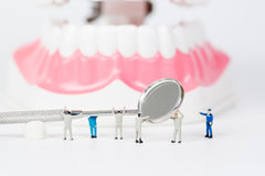People to clean tooth model Stock Image