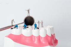 People to clean tooth model Royalty Free Stock Images