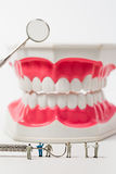 People to clean tooth model ,miniature Royalty Free Stock Photo