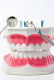 People to clean tooth model on white background Stock Image