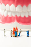 People to clean tooth model on white background Royalty Free Stock Photos