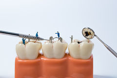 People to clean tooth model on white background royalty free stock images