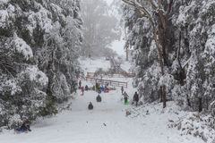 People tobogganing on Mount Donna Buang toboggan run Royalty Free Stock Photo