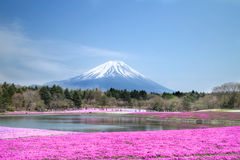 People from Tokyo and other cities come to Mt. Fuji and enjoy the cherry blossom at spring every year Stock Photo