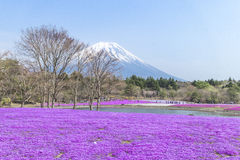 People from Tokyo and other cities come to Mt. Fuji and enjoy th Royalty Free Stock Photos
