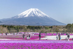People from Tokyo and other cities come to Mt. Fuji and enjoy th Stock Photography