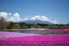 People from Tokyo and other cities come to Mt. Fuji and enjoy th Stock Photo
