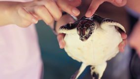 People touching head of sea turtle stock footage