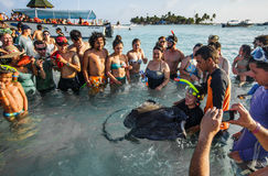 People Touching a Stingray in shallow water Stock Photo
