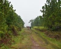 People tourist PhuKradueng national park Stock Photography