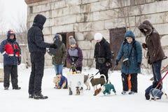People train dogs in winter. Russia Ivanovo Dec 24, 2017, people train dogs in winter, editorial Stock Photos