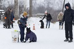 People train their dogs, dog walking. Russia Ivanovo 24 December 2017, people train their dogs, dog walking, editorial Royalty Free Stock Photography
