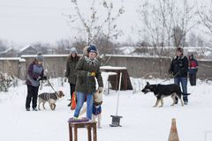 People train their dogs, dog walking. Russia Ivanovo 24 December 2017, people train their dogs, dog walking, editorial Stock Image