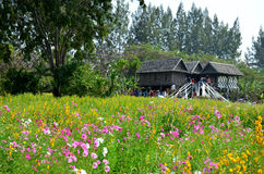 People travel and playing at Jim Thompson Farm Royalty Free Stock Images