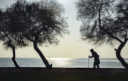 People and Trees, Elderly woman walking on a cane. Old woman who walks on the beach walking stick between old trees Stock Images