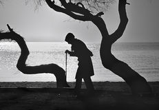 People and Trees, Elderly woman walking on a cane. Old woman who walks on the beach walking stick between old trees Royalty Free Stock Photo