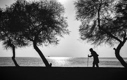 People and Trees. Elderly woman walking on a cane. Old woman who walks on the beach walking stick between old trees Royalty Free Stock Image