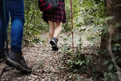 People Trekking in a forest Royalty Free Stock Photography