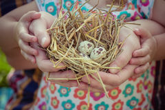 People of two generations holding nest in palms Royalty Free Stock Photography