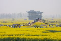 People with umbrellas, rainy season in Qiandao rape field, China
