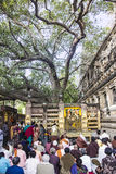 People under the bodhi tree Royalty Free Stock Image