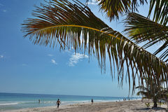 People under palm tree on Caribbean beach. Mexico.  Royalty Free Stock Photography