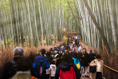 People visit bamboo grove, Arashiyama Royalty Free Stock Photography