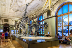 Free People Visit Dinosaur Prehistoric Exhibit At The Museum Of Natural History (Naturhistorisches Museum) Royalty Free Stock Photos - 65758358