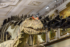 Free People Visit Dinosaur Prehistoric Exhibit At The Museum Of Natural History (Naturhistorisches Museum) Royalty Free Stock Photography - 65758377