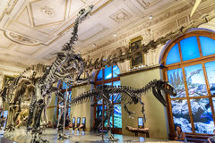 Free People Visit Dinosaur Prehistoric Exhibit At The Museum Of Natural History (Naturhistorisches Museum) Royalty Free Stock Photos - 65758398