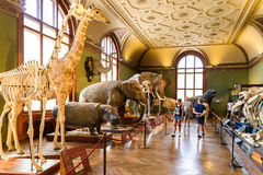 People Visit The Museum of Natural History (Naturhistorisches Museum) In Vienna Stock Images