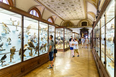 Free People Visit The Museum Of Natural History In Vienna Stock Image - 65819381