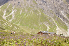 People wading through flowers to mountain hut Stock Photography