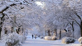 People walk along the snow-covered avenue. Tree branches bend under a lot of snow. Two women walking on the road in winter jackets stock footage