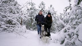 People on a walk in the forest. A man and a Siberian Husky dog are pulling a sleigh with a child in the snow in the