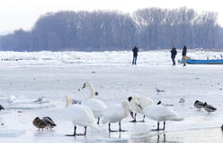 People walk on the frozen Danube river Royalty Free Stock Photos