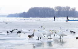 People walk on the frozen Danube river Royalty Free Stock Images