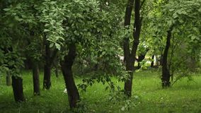 People walk in the park amid thick green trees in spring. bushy park with high dense green grass. static frame.  stock video footage