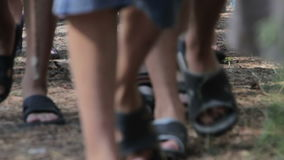 People Walk in the Pine Forest stock footage