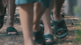 People Walk in the Pine Forest stock video