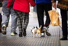 People Walk Small Dogs stock images