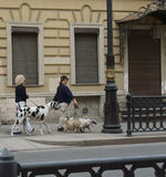 People walk with their favorite dogs. Unknown people are walking with their favorite dogs in the city. Photo taken in St. Petersburg on June 12, 2017 Stock Image